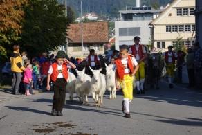 Farbenprächtige Viehschau 2016