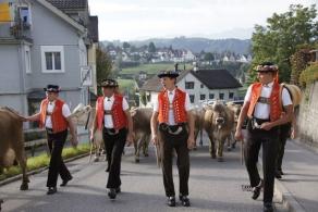Viehschau 2011