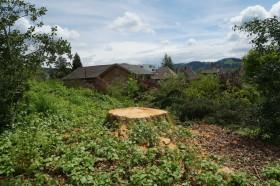 rodung thuerer park (6)