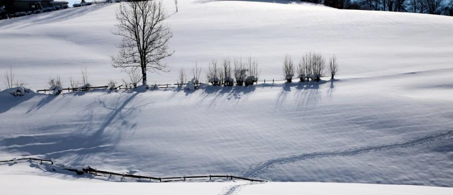schneestudien marlis 1.2 (1)