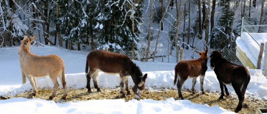 slider marlis winter februar 2015 (22)