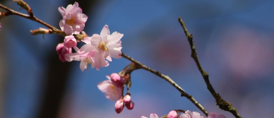 fruehling pflanzen (1)