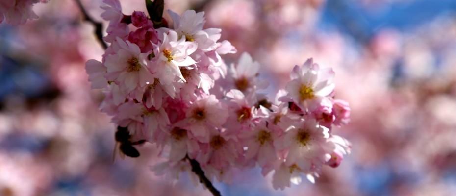 fruehling pflanzen (12)