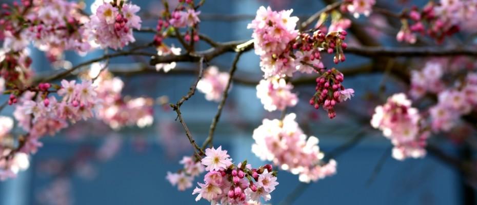 fruehling pflanzen (13)