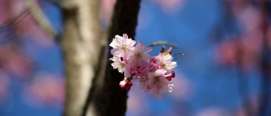 fruehling pflanzen (14)