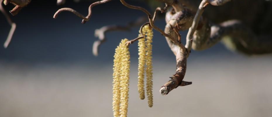 fruehling pflanzen (2)