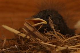 vogelnest badi teufen  (24)