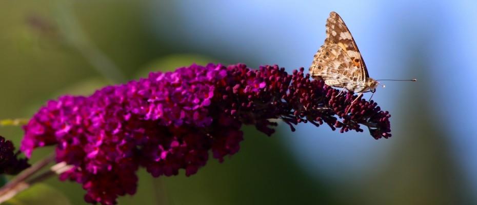 marlis sommer blumen (15)