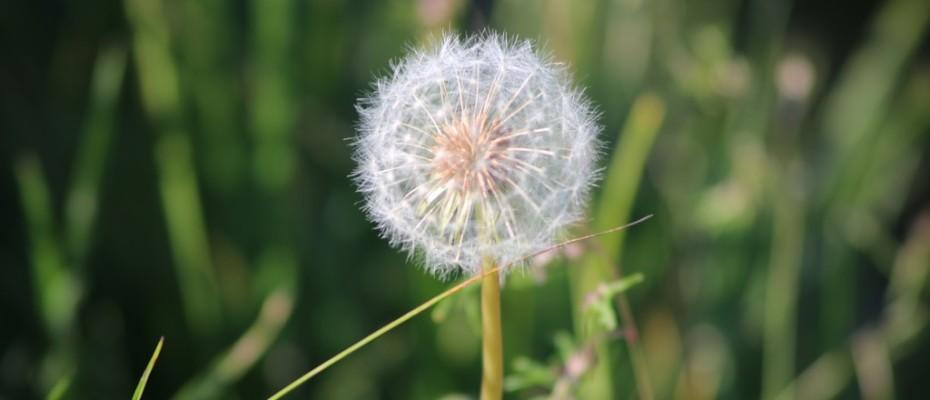 marlis sommer blumen (2)