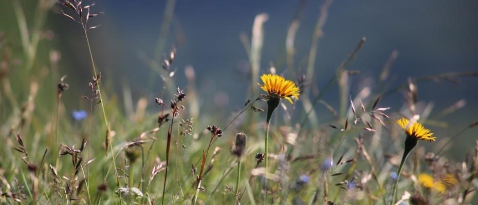 marlis sommer blumen (4)