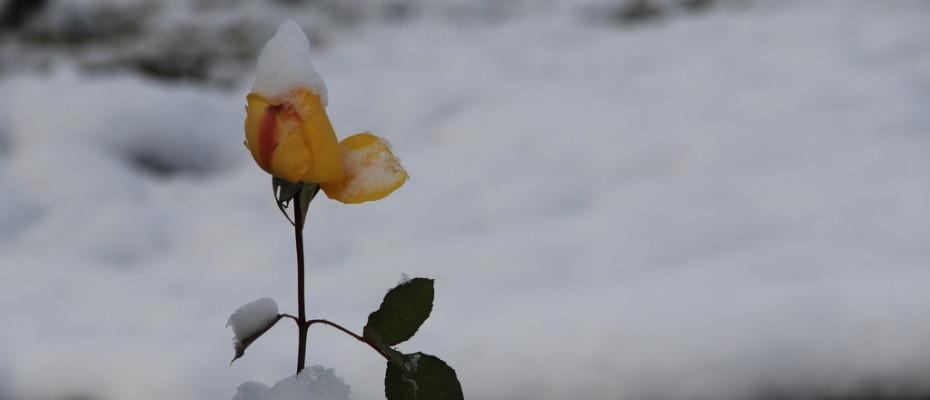 Erster Schnee in Teufen (12)
