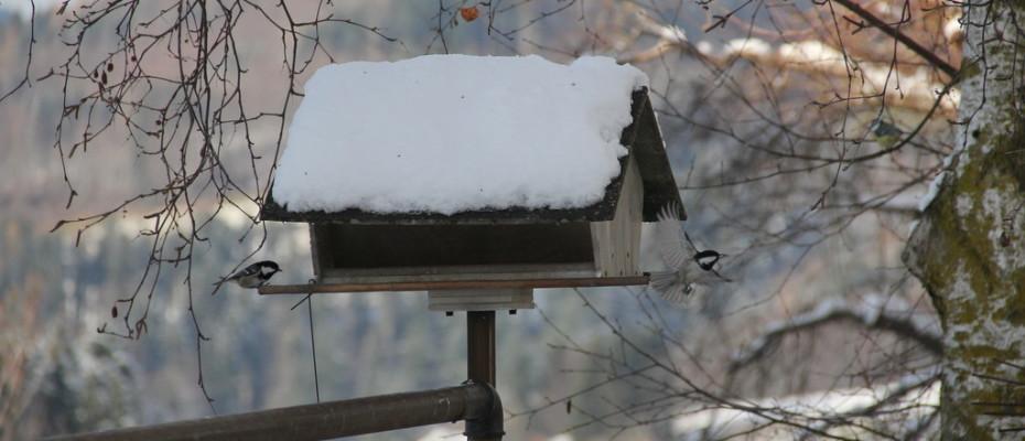 Erster Schnee in Teufen (19)
