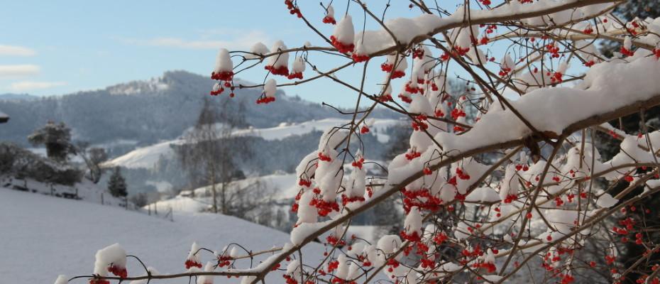 Erster Schnee in Teufen (2)