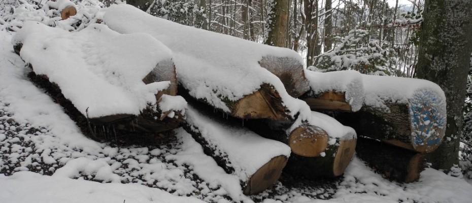 wintereinbruch  impressionen felice (4)