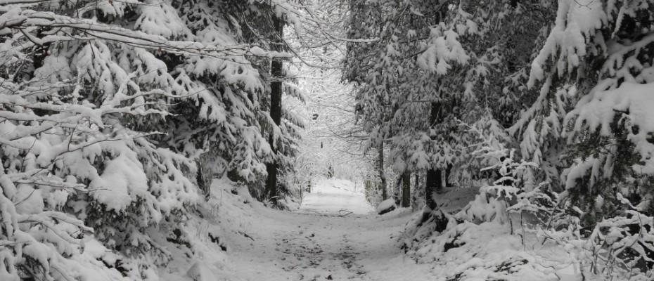 wintereinbruch  impressionen felice (5)