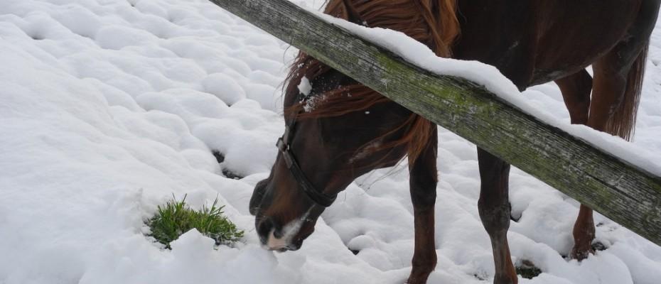 wintereinbruch  impressionen felice (9)