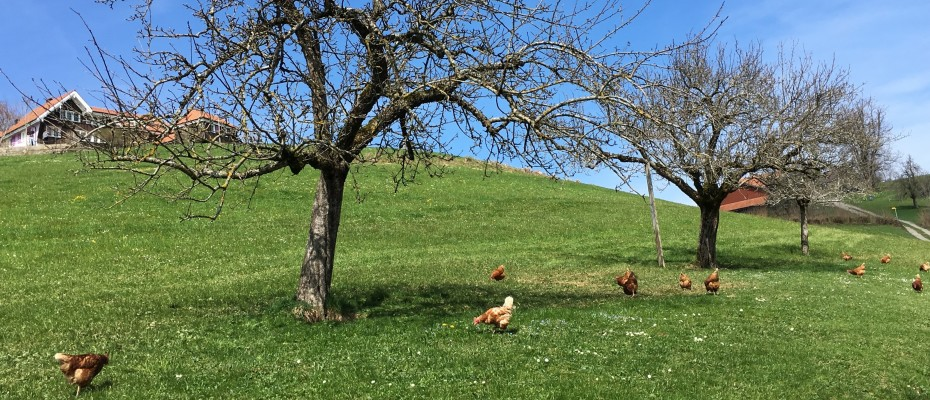 fruehling 2016 2 marlis 10.4 (29)