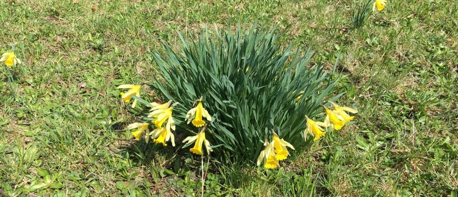 fruehling 2016 2 marlis 10.4 (3)