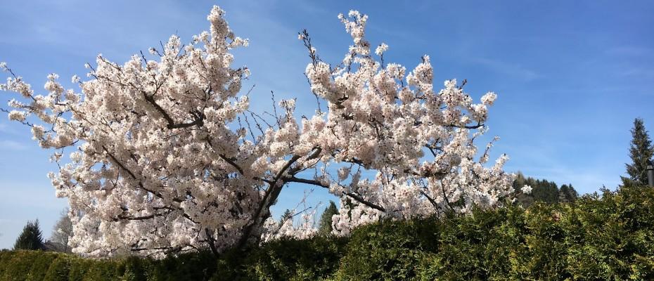 fruehling 2016 2 marlis 10.4 (32)