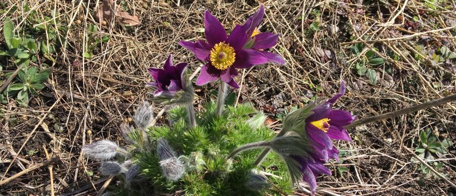 fruehling 2016 2 marlis 10.4 (5)